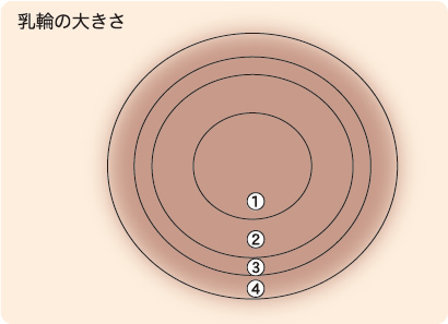 乳輪の大きさ